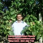kaman-cevizi-fidani-mitat-dag-541-5807740 (2)