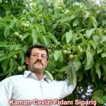 kaman-cevizi-fidani-mitat-dag-541-5807740 (26)