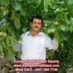 kaman-cevizi-fidani-mitat-dag-541-5807740 (29)