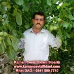 kaman-cevizi-fidani-mitat-dag-541-5807740 (30)