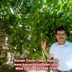 kaman-cevizi-fidani-mitat-dag-541-5807740 (4)