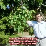 kaman-cevizi-fidani-mitat-dag-541-5807740 (5)