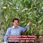 kaman-cevizi-fidani-mitat-dag-541-5807740 (50)
