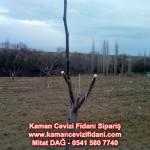 kaman-cevizi-fidani-mitat-dag-541-5807740 (6)