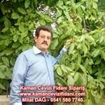 kaman-cevizi-fidani-mitat-dag-541-5807740 (67)