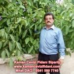 kaman-cevizi-fidani-mitat-dag-541-5807740 (68)