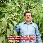 kaman-cevizi-fidani-mitat-dag-541-5807740 (69)