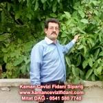 kaman-cevizi-fidani-mitat-dag-541-5807740 (71)