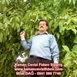 kaman-cevizi-fidani-mitat-dag-541-5807740 (74)