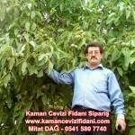 kaman-cevizi-fidani-mitat-dag-541-5807740 (75)