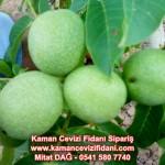 kaman-cevizi-fidani-mitat-dag-541-5807740 (80)