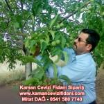 kaman-cevizi-fidani-mitat-dag-541-5807740 (81)