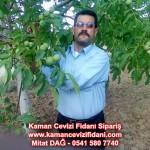 kaman-cevizi-fidani-mitat-dag-541-5807740 (82)