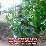 kaman-cevizi-fidani-mitat-dag-541-5807740 (84)