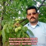 kaman-cevizi-fidani-mitat-dag-541-5807740 (85)