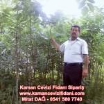 kaman-cevizi-fidani-mitat-dag-541-5807740 (87)