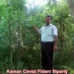 kaman-cevizi-fidani-mitat-dag-541-5807740 (88)