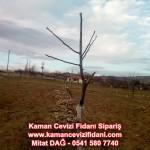 kaman-cevizi-fidani-mitat-dag-541-5807740 (9)