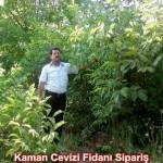 kaman-cevizi-fidani-mitat-dag-541-5807740 (96)