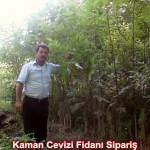 kaman-cevizi-fidani-mitat-dag-541-5807740 (97)