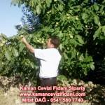 kaman-cevizi-fidani-mitat-dag-541-5807740 (98)