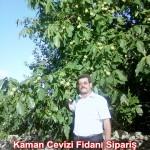 kaman-cevizi-fidani-mitat-dag-541-5807740 (99)