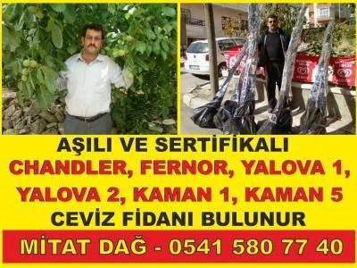 Ankara Çankaya Karahasanlı Mahallesi Kaman Cevizi Fidanı Dikimi