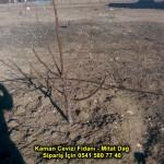 kaman-cevizi-fidani-2016-ilkbahar-dikim-video-nasil-yapilir-chandler-fennor-altay-toprak (14)