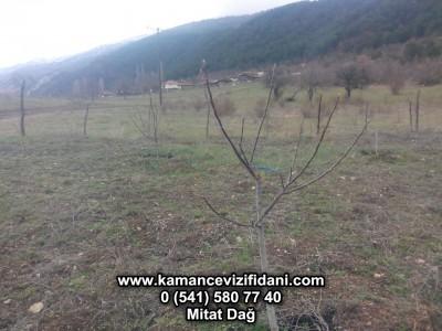 Çankırı Çerkeş Ovacık Köyü Fidan Kontrolü ve Budama