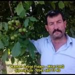 kaman-cevizi-fidani-yeni-mahsul-yerli-ceviz-chandler-fernor-fidan (28)