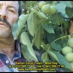 fernor fernette chandler kaman ceviz fidani satis adres telefon bilgi hangisi iyi don olayi hastalik iri ceviz yaprak asi kalemi kis yaz sonbahar ilkbahar ankara kecioren  (4)