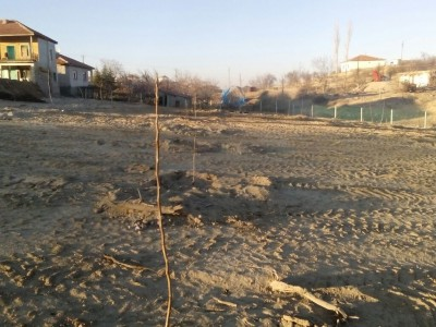 Aksaray Sarıyahşi Boğazevci Köyü Kaman 1 – 5 Fidan Dikimi
