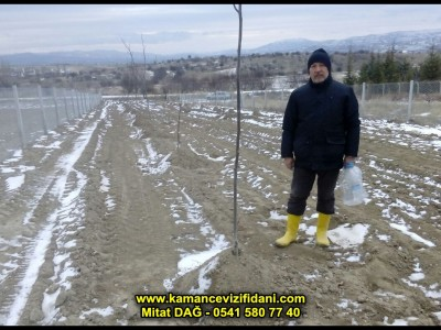 KAHRAMANKAZAN Karalar Köyü Kaman Cevizi Fidanları Kontrolü