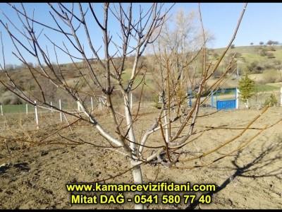 Yozgat Çayıralan Bahçe Kontrol ve Budama 2