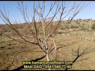 Kırıkkale Kaman Cevizi Bahçesi Kontrol ve Budama