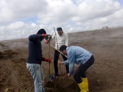 Ankara Gölbaşı Oyaca Mahallesi Kaman Cevizi Fidanı Dikimi