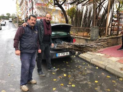 Ankara Memlük Köyü Kaman Cevizi Fidanı Dikimi