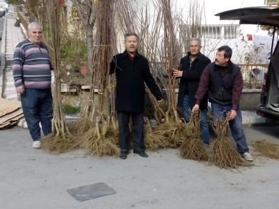 2019 İlkbahar Dikimi İçin Fidanlarımızı Tüm Türkiye'ye Gönderiyoruz